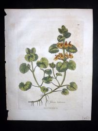 Woodville 1810 Hand Col Botanical Print. Glechoma Hederacea. Ground Ivy 111